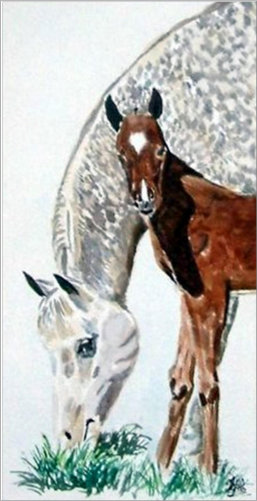 Arab Mare and Foal  water colour  (Sold)
