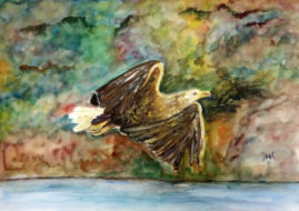 'Eagle'   watercolour