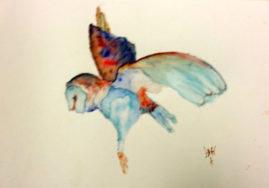 'Barn Owl'   watercolour