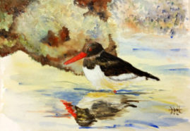 'Oyster Catcher'   watercolour