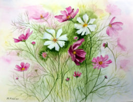 'Cosmos'   watercolour