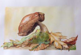 """Mushroom"" water colour"