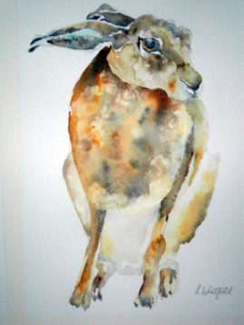 """Coy"" water colour - Sold"