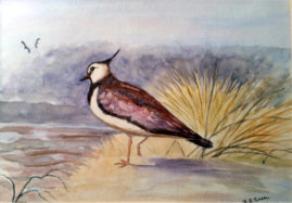 'Lapwing'  watercolour