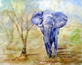 Advancing Elephant   in water colour